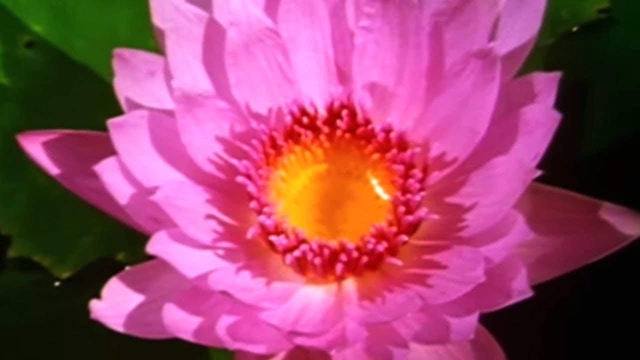Facts About Plants ? - Secret Nature | Plant Documentary | Natural History Channel