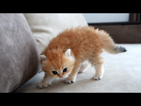 The most dangerous kitten in the world