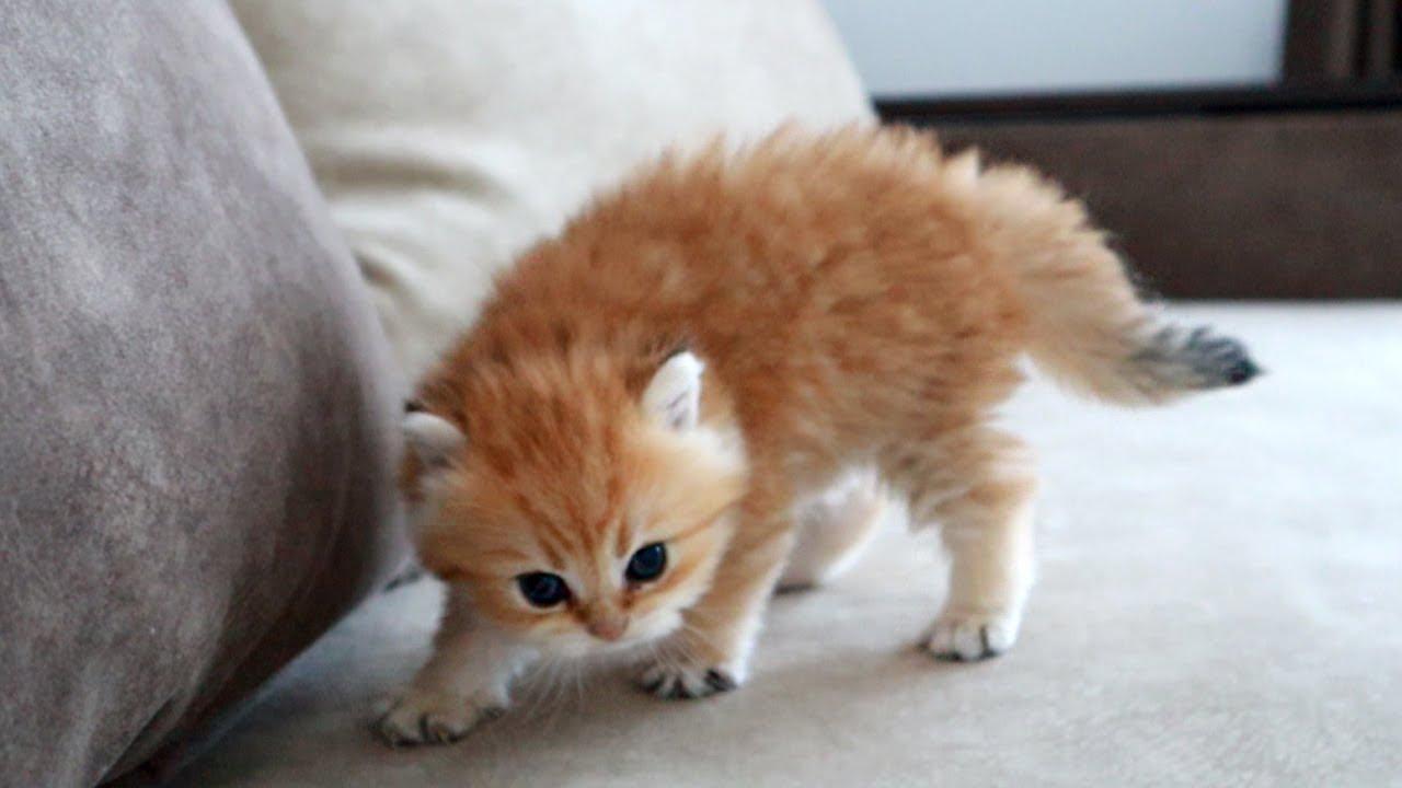 The most dangerous kitten in the world