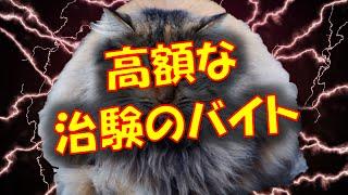 【修羅場】1ヶ月弱で40万円以上の治験のバイトやってみた結果w チャン...