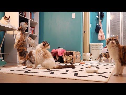 치순&콩 고양이 손님들은 첫날 밤 무얼할까?