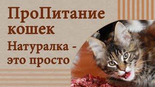 Сделать корм для кошки? Легко!