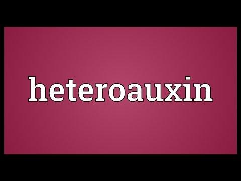 Header of heteroauxin