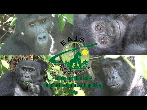 East African Jungle Safaris: Uganda Tour - Bwindi Gorilla Trek/QENP (Promo)