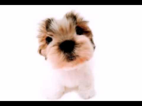 Happy Birthday Funny Birthday Songs Super Cute Puppy Edition Youtube