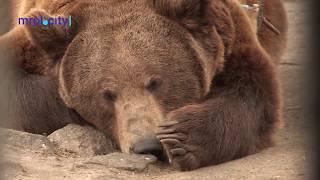Медведь Потап надел автошину в мариупольском зоопарке