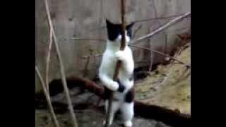 Вот как действует валерьянка на кошек=DDD