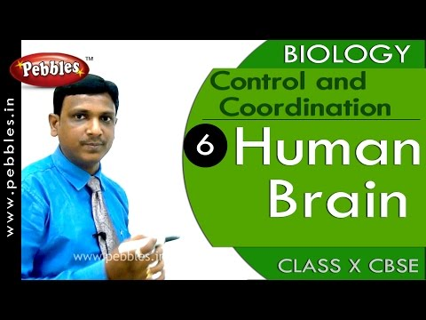 Human Brain| Control and Coordination | Biology | CBSE Class 10 Science