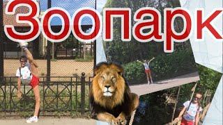 Зоопарк в Питере|экзотические животные|какой в Санкт-Петербурге зоопарк|развлечения в спб|👍🏻😽