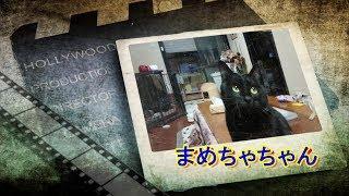 まめちゃちゃんと人参 thumbnail