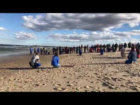 Gray seal release at Scusset Beach