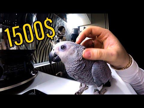 Купили НОВОГО попугая ► Подарил сестре КАМЕРУ ✅