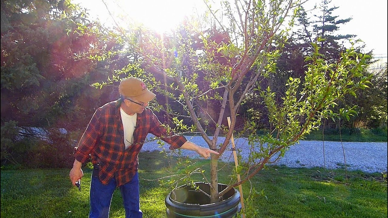 spring-fruit-tree-care-and-emergency-measures