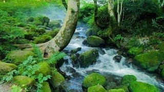 [ 4K UHD ]夏の伯耆大山と木谷沢渓流 Mt.Daisen & Kitanisawa Stream in Summer