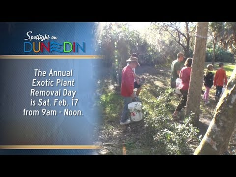 Hammock Park Exotic Plant Removal Day is Sat., Feb. 17, 2018!