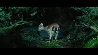 сумерки (2008 г.)