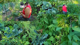 A Hardworking Nepali Woman Has Her Own Organic Vegetables Farm In America|How To Grow vegetables|