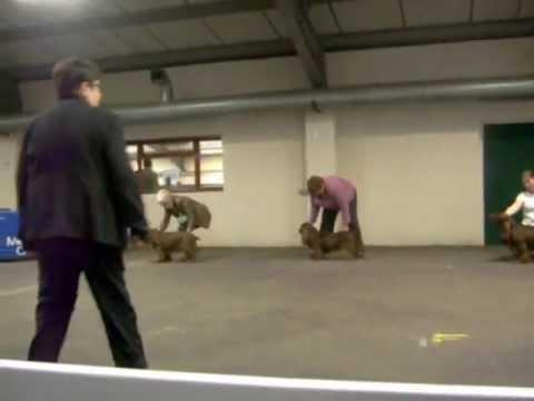 Midland Counties CH Dog Show Sussex Spaniel Bitch CC
