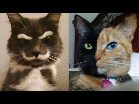 Разнообразие окрасок кошек