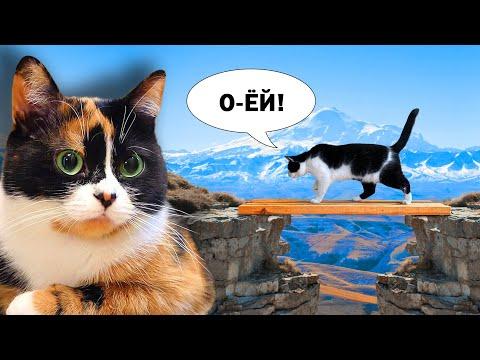 ИСПЫТАНИЕ для КОТОВ от SLIVKISHOW ! КУКИ против кота МАЛЫША