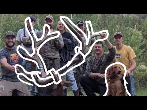 NEW HUNTER SHOOTS PUBLIC LAND GIANT ELK!! You HAVE TO SEE THIS!! 2021 archery