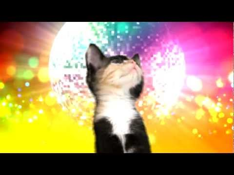 Kittens a Go-Go: Cat Dance Party