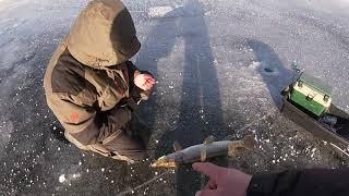 Судак на ратлины щука на жерлицы Зимняя рыбалка 2020 2021 первый лед