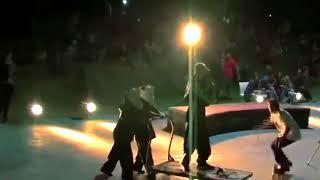 Venus y Adonis en Skatepark Lugano