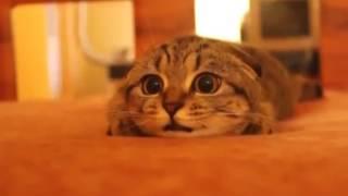 Кот смотрит ужастик эмоционально