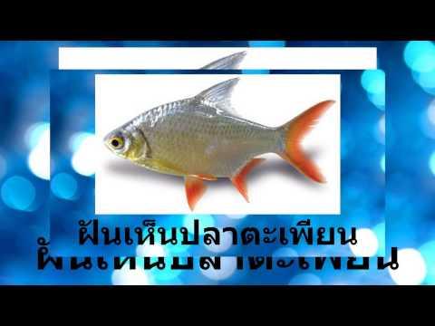 ฝันเห็นปลาตะเพีียน