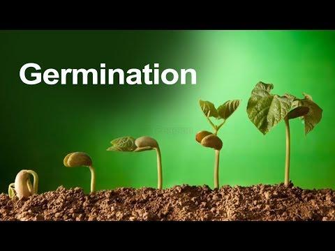 Botany Basics: Seed Plants Types and Parts — Jolie Canoli