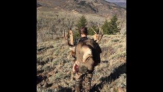Deer Hunt in Colorado
