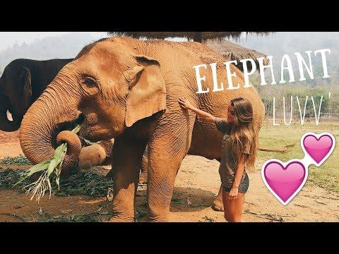 LOVIN' ON ELEPHANTS IN THAILAND ~ vlog_3   Tess Florio