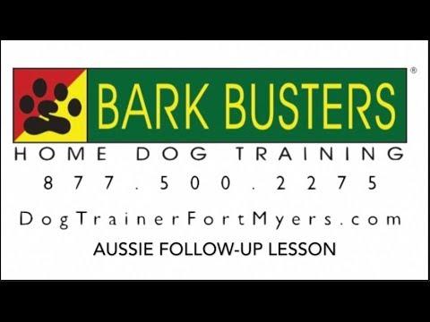 Australian Shepherd - No Jumping - Dog Training of Fort Myers K9 - Patrick Logue Dog Trainer