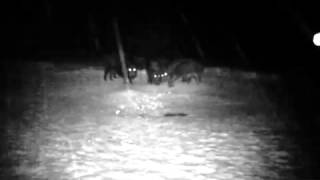 Кормушка 1 (прикормка для кабана) видео с камеры(, 2014-01-14T20:09:36.000Z)