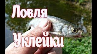 Поплавочная ловля Уклейки.  Рыбалка на Волге 2019.