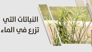 امل القيمري - النباتات التي تزرع في الماء