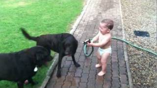 Baby Spraying Dogs With Water