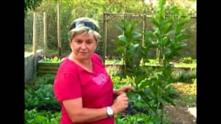 The Gardener Magazine: Caring For Your Lemon Tree