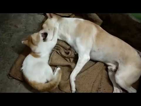 Funny cat and dog 2019 cat vs dog funny animals video Full HD