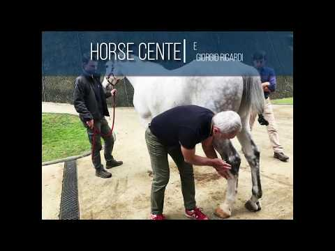 EVE - Extreme Veterinary Experience Dr. Giorgio Ricardi