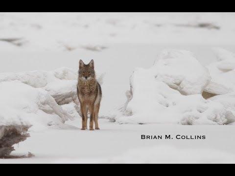 Winter Wildlife Photography Inspirational Short Film
