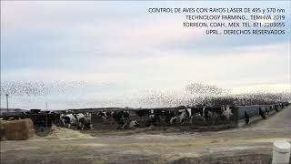 CONTROL DE AVES CON LASER... TECHNOLOGY FARMING 2019