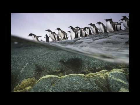 Polar Obsession (National Geographic)