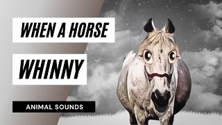 When A Horse Whinny - Sound Effect - Animation