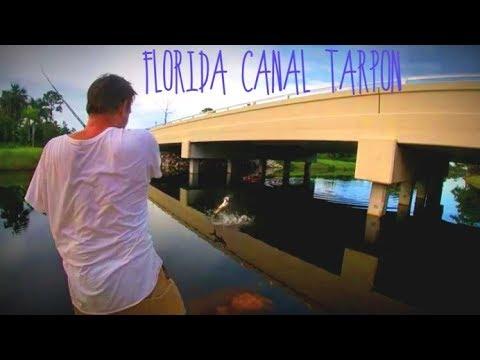 Fishing For Florida Tarpon In Canals #TARPON + #SNOOK