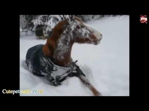 Видео прикол: Лошади напугали девушку