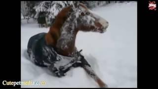 Лучшие видео с лошадьми, приколы и падения video horses Funny animals Jokes with animals