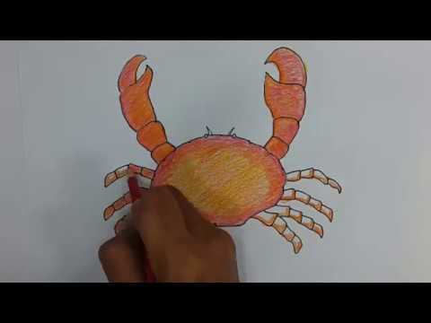 Cara Menggambar Dan Mewarnai Kepiting Youtube