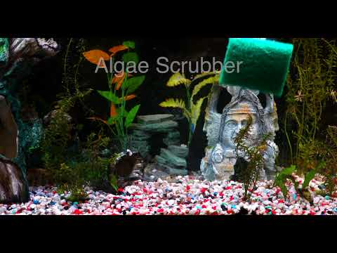 HOW TO CLEAN YOUR AQUARIUM GLASS, GRAVEL, SAND AND AQUASCAPE WITH ONE TOOL